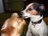chico-01-2012-005