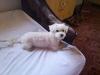 chyska-10-2010-006