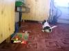 chyska-10-2010-011