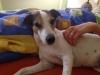 jessie-u-nas-22062014-042