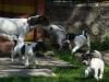 JO-JO-poprve-venku-2009-040