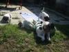 JO-JO-poprve-venku-2009-084