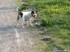 Nedbalkovic-smecka-30.4.2012-005