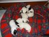porod-20-11-2012-016