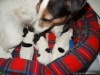 porod-20-11-2012-019