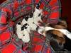 porod-20-11-2012-026