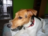 02-coursing-a-hukvaldy-12-1-2014-001