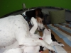 02-coursing-a-hukvaldy-12-1-2014-007