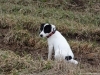 02-coursing-a-hukvaldy-12-1-2014-011