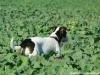pribram-10-2011-004