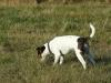 pribram-11-2011-001