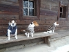 roznov-01-2012-004