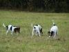 sraz-prtousku-v-chysce-10-2009-135