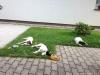 Setkani-s-Benjim-podruhe-7.7.2013-039-