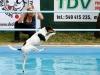 03-WaterDogs-09-2012-3