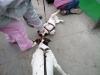 zoo-praha-26-3-014