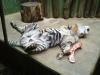 zoo-praha-26-3-051